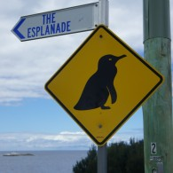 Warning: Penguins!