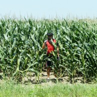 Bicyclists outstanding in their field